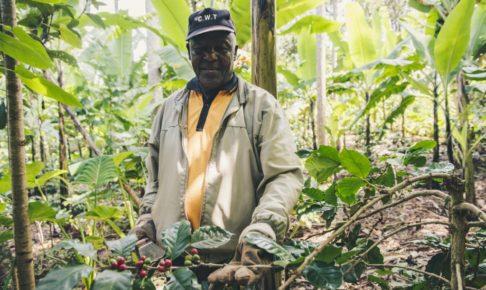 タンザニア キリマンジャロ